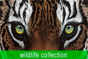Wildlife Collection Maree Davidson Art