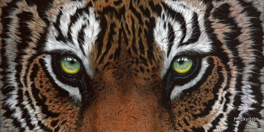 TIGER EYES PAINTING - FOCUS Maree Davidson Art