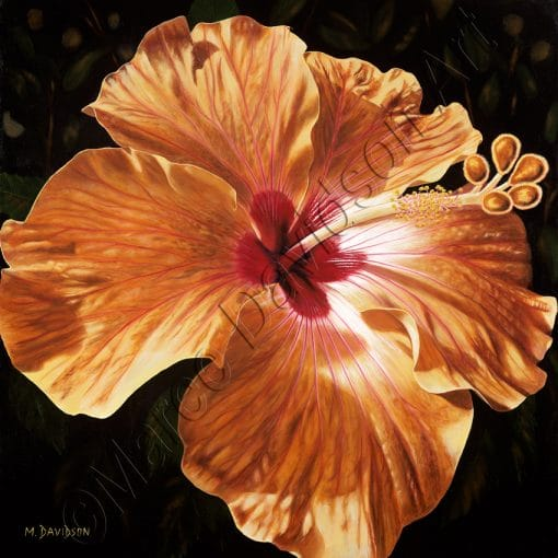 FLOWER COLLECTION - RADIANCE Maree Davidson Art