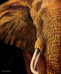 WISDOM - ELEPHANT PAINTING Maree Davidson Art