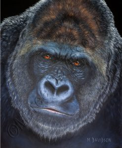 KING - GORILLA PAINTING Maree Davidson Art