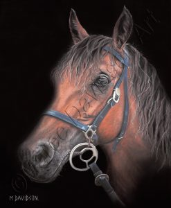 HORSE COLLECTION - SECOND CHANCE Maree Davidson Art