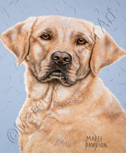 DOG COLLECTION GOLDEN LABRADOR - MASON Maree Davidson Art