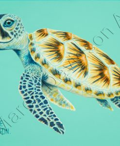 SHELBY THE TURTLE Maree Davidson Art