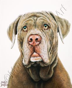 DOG COLLECTION - NEAPOLITAN BULLMASTIFF Maree Davidson Art