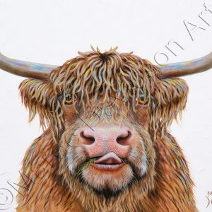 HAMISH THE HIGHLAND COW Maree Davidson Art
